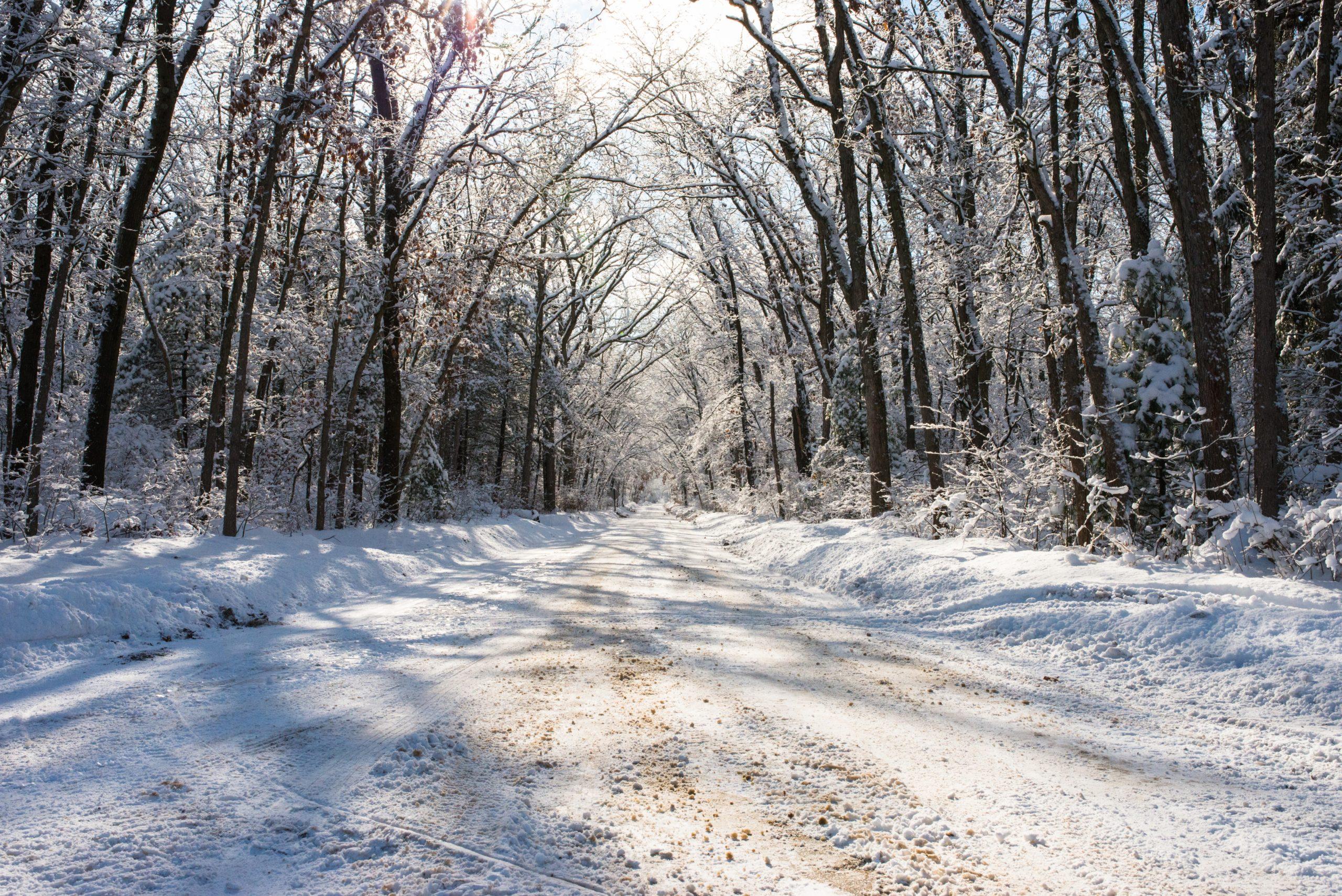 Snow Day Silence